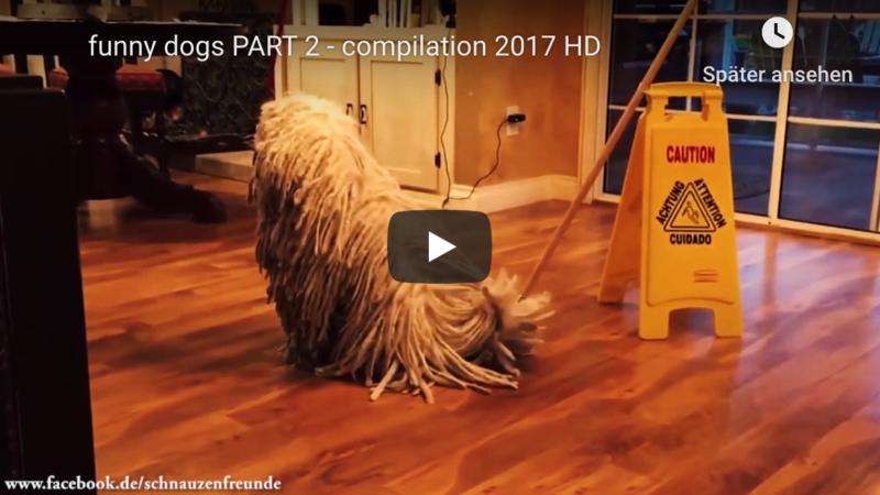 Lustige Hunde Videos
