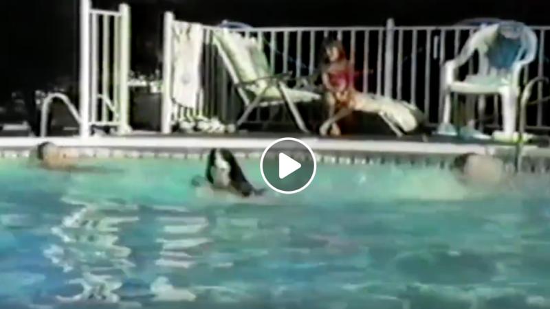 Wasser Spaß mit Hunden